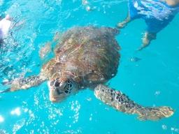 Jojo the turtle