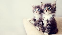 cute_kittens-wallpaper-1280x720