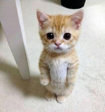 Hello Kitty~ 2017-10-13